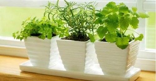 5 plantas tóxicas que todo el mundo debe conocer