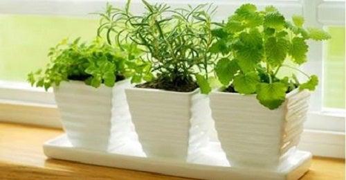 8 hierbas medicinales que puedes plantar en casa