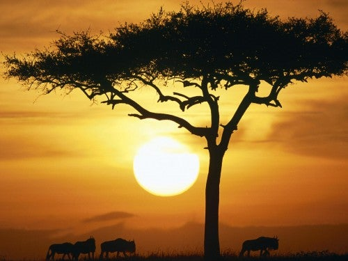 África, su tierra