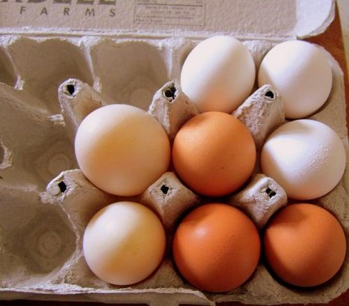 comer huevos ecológicos