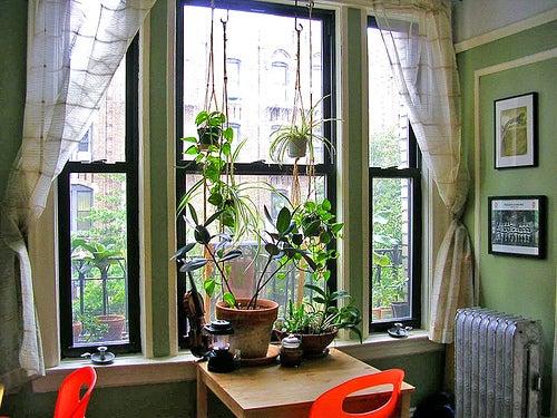 Tener plantas purificadoras en casa ayuda a limpiar el aire.