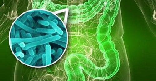 10 señales que te indican que tienes sobrecrecimiento bacteriano en el intestino