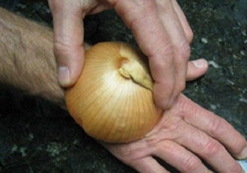 Picadura-cebolla