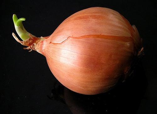 cebolla para la mucosidad