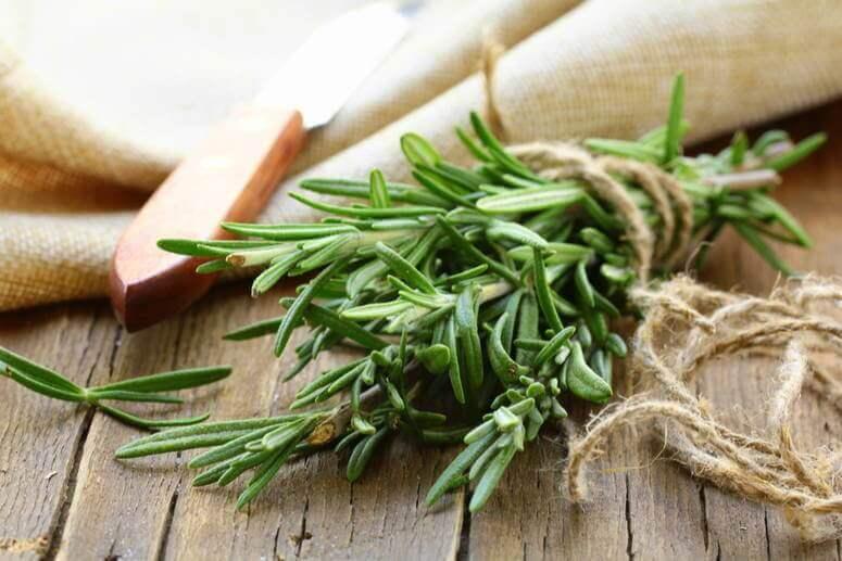 El romero se utiliza de diversas maneras en la cocina y la cosmética.