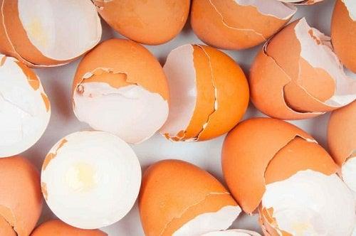 para que sirve la membrana de la cascara de huevo