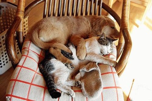 cat dog mizuo_fiat