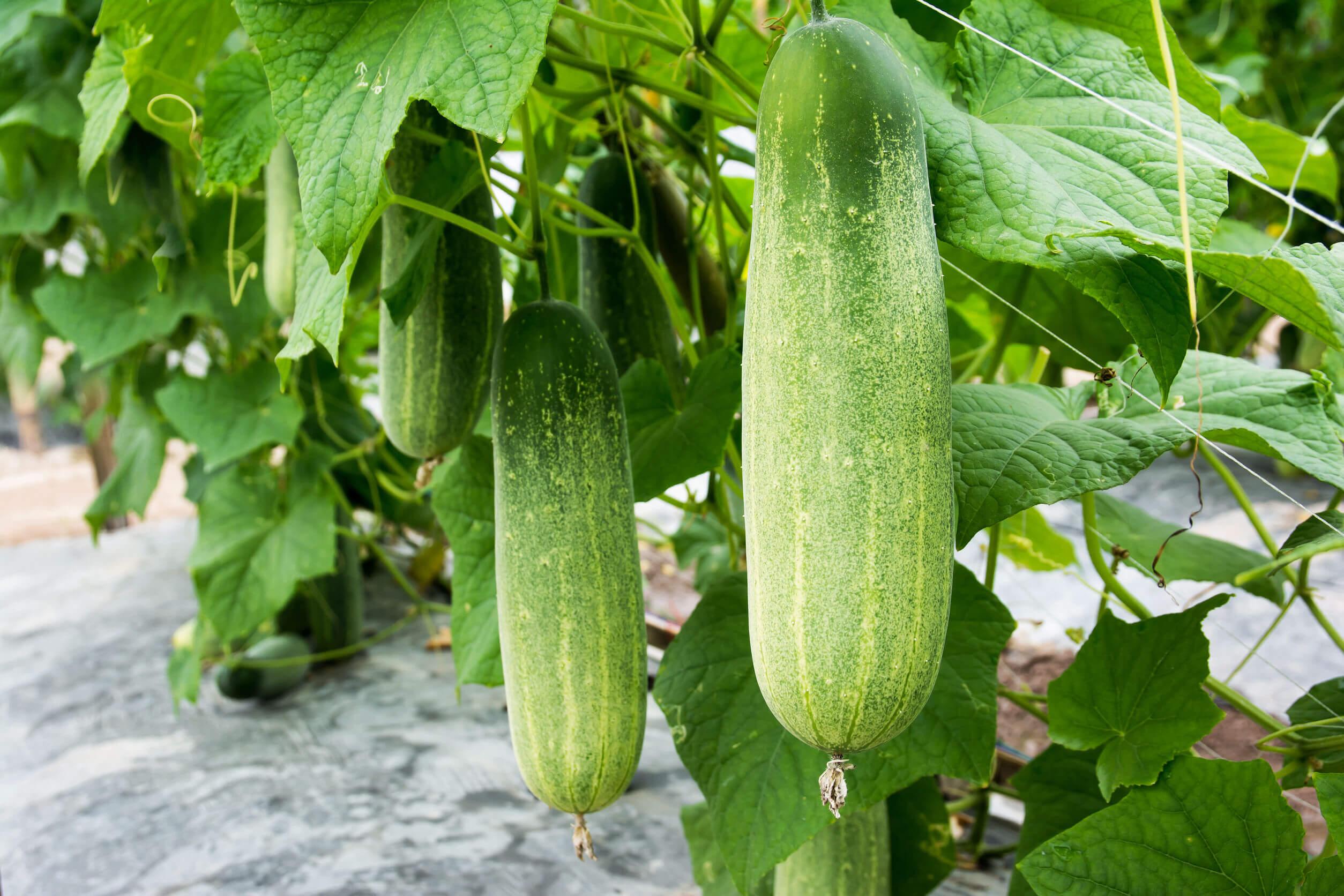 Las frutas y vegetales son deliciosas.