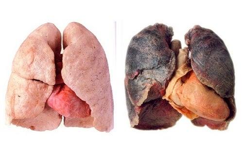 Tips para tener unos pulmones más limpios