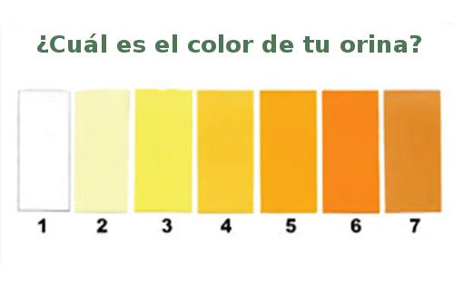Escala de color de la orina