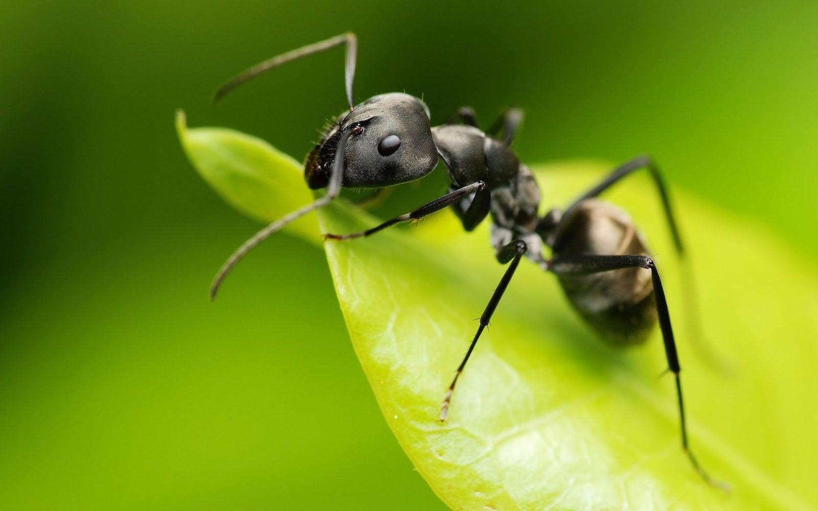 Picadura ocasionada por hormiga