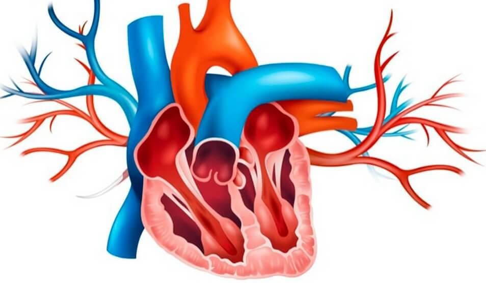 Válvula corazón
