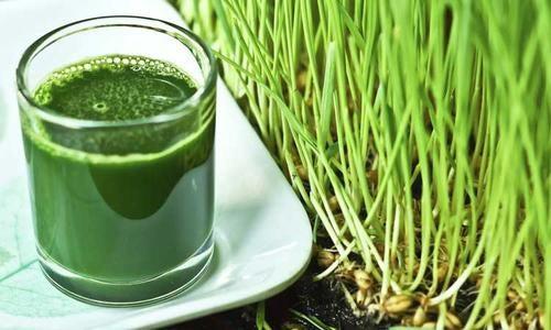 15 beneficios de la hierba de trigo que quizá no sabías