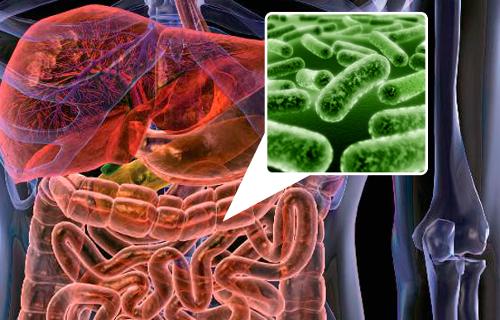 5 alimentos para repoblar la flora intestinal