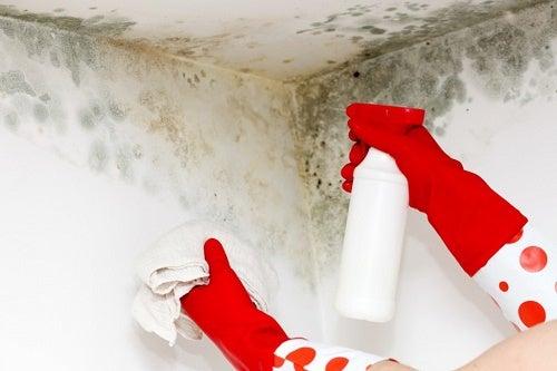 Trucos caseros para eliminar el moho del hogar