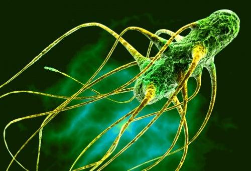 Salmonela: síntomas de su envenenamiento