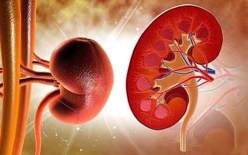 7 señales de problemas renales