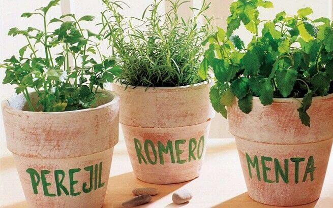 Cómo plantar en casa romero, perejil y menta