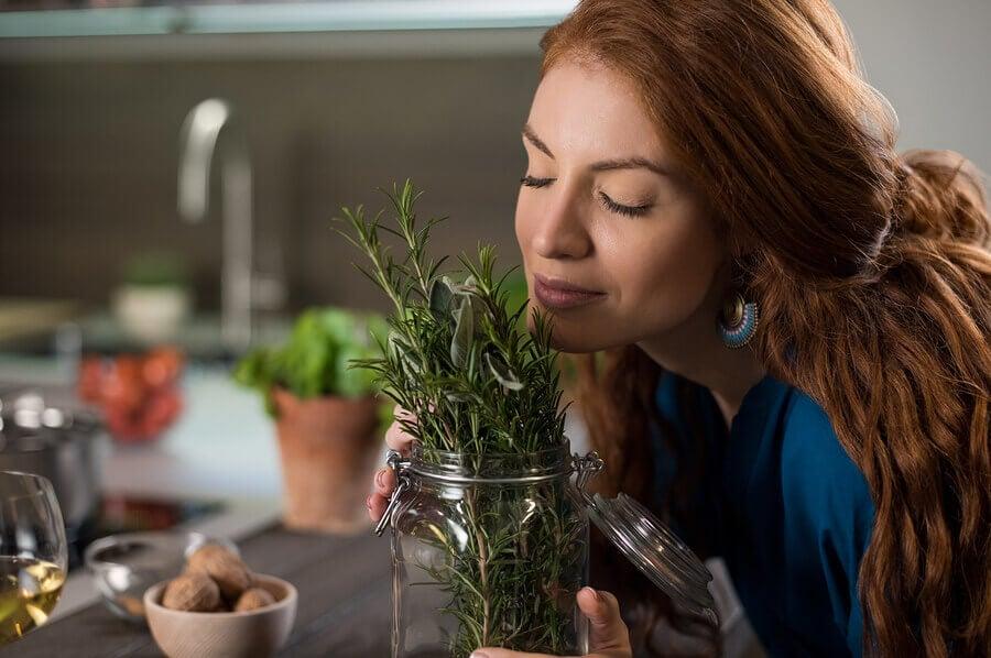 ¿Cómo plantar romero en casa?
