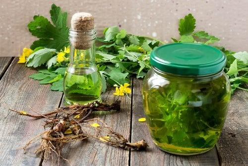 ¿Cómo-actúan-las-hierbas-frutas-o-verduras-diuréticas-en-nuestro-cuerpo