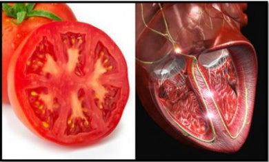 Similitud entre tomate y corazón