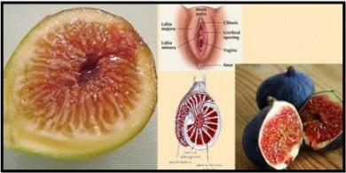 Parecido entre higos y genitales