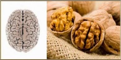 Parecido entre las nueces y el cerebro