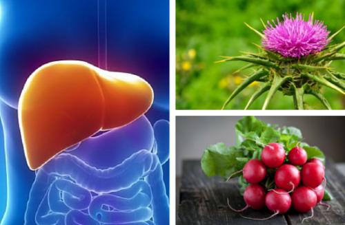 Cómo regenerar el hígado con cardo mariano y rábano