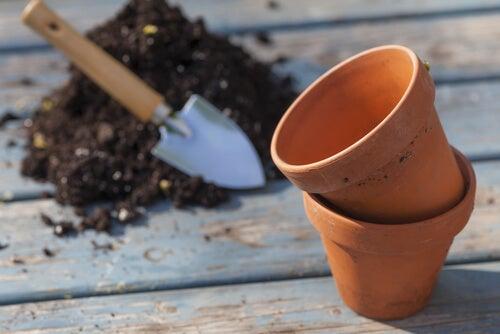 Maceta para cultivar jengibre en casa