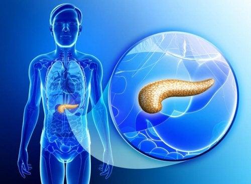 Para qué sirve y cómo cuidar el páncreas