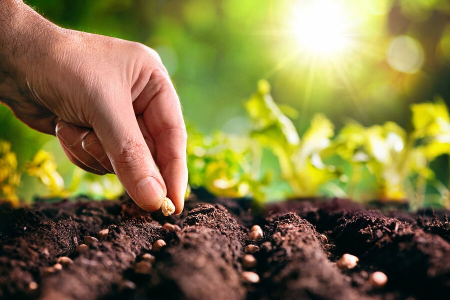 Mano plantando semillas en la tierra.