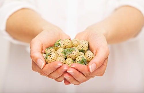 Características-de-la-Pineberry-o-alma-blanca