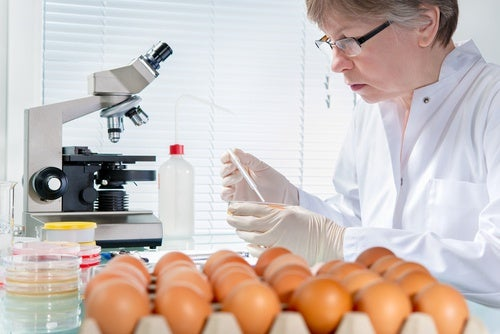 Huevos-y-salmonella