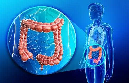 Licuado antiinflamatorio y reparador del intestino