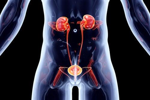 Para-las-vías-urinarias