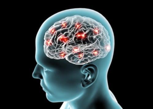 Nuestro cerebro diferencia lo importante de lo banal