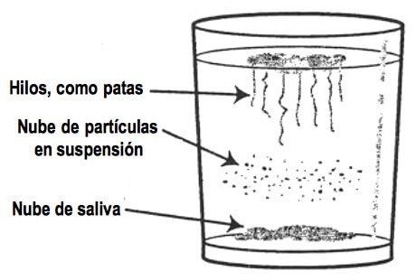 Prueba casera para detectar la cándida en el cuerpo y cómo eliminarla naturalmente