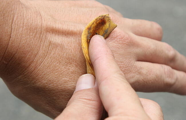 Usos increíbles de algunas cáscaras de fruta:  ¡Descúbrelos!