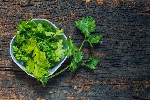 que beneficios tiene el cilantro para adelgazar