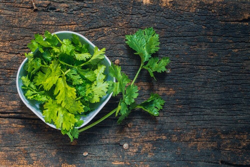 ¿Para qué sirve el cilantro? ¡Descubre todas sus propiedades!