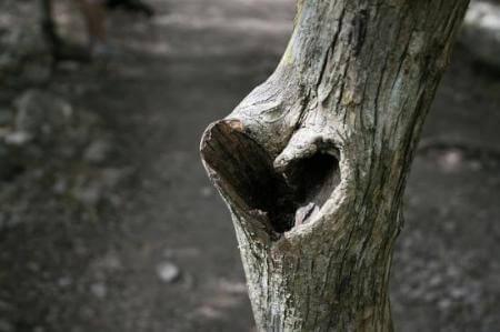 coraza-n