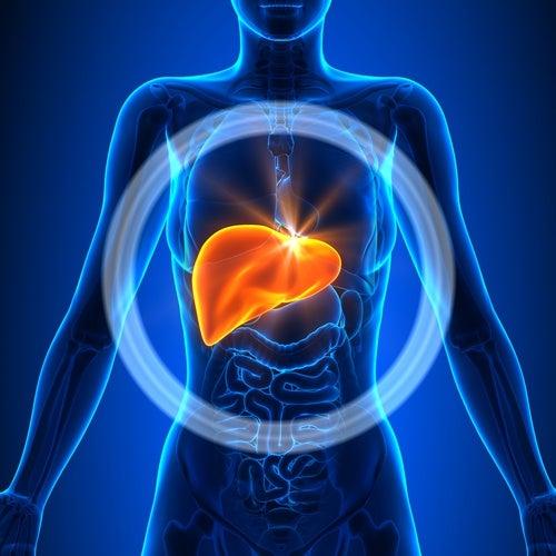 Imagen del hígado