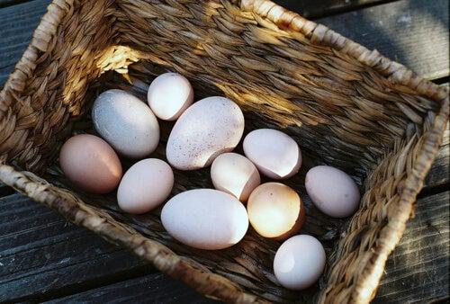 3 tipos de huevos que también deberías probar: ¡Descúbrelos!