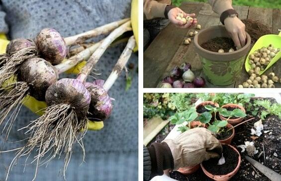 8 plantas aromáticas y medicinales que deberías tener en tu hogar