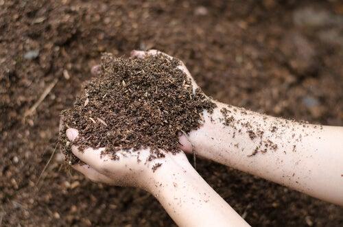 El riego es uno de los cuidados especiales que hay que tener con las plantas