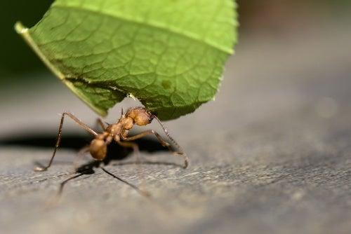 Repeler-las-hormigas