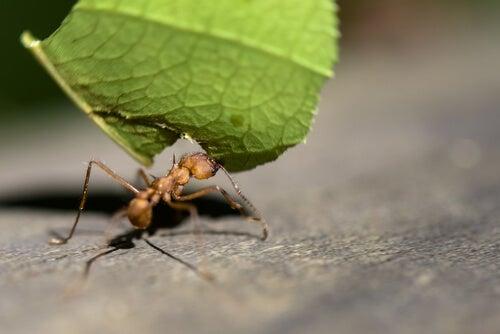 Hormigas en el jardín