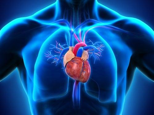 Una bacteria podría relacionar enfermedades cardíacas y de encías
