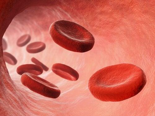 La circulación sanguínea