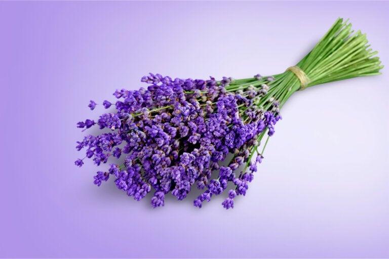 6 plantas con propiedades analgésicas para aliviar los dolores